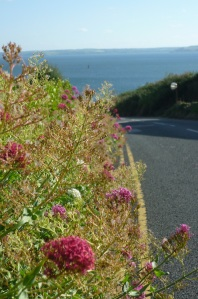 Flowers by roadside