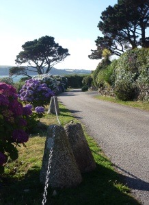 Hydrangeas next to coastal path