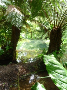 Jungle Fever from the Lost Gardens of Heligan.