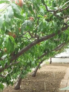 Peach House 2